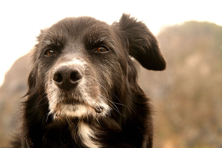 perros-ancianos-fotos